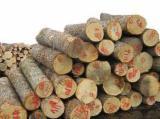 White oak US logs
