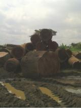 Tropical Wood  Logs - AZOBE WOOD LOGS