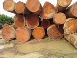 Tropical Wood  Sawn Timber - Lumber - Planed Timber - AFZELIA WOOD LOGS