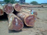 paduck timber