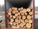 Schnittholzstämme, Mongolische Waldkiefer