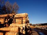 Bustean de gater, Douglas Fir, Oregon Pine (North America)