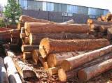 Tropsko Drvo  Trupci - Za Rezanje (Furnira), Abura (Bahia, Elolom)