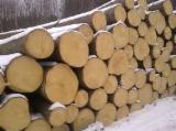 Softwood  Logs - BUYING SPRUCE LOGS