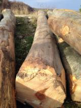 Beech logs sawing grade