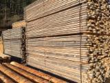 Laricio Pine (Pinus nigra), PEFC