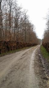 Oak  Firewood, Pellets And Residues - Oak (European) in France 15 cm