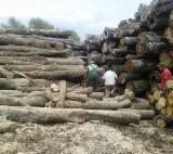 Firewood - Chips - Pellets Supplies - Beech (Europe) Firewood/Woodlogs Cleaved