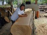 Hardwood  Logs Beech Europe For Sale - we supply ,Iroko, Tali, Sapele, Acajou, Bubinga, Ebony, Mahogany, Frake, Teak, Padauk Etc