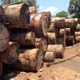 Peeling Logs - Offer the Keruing round logs