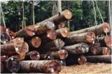 Tropical Wood  Logs Netherlands - Saw Logs, Basralocus (Angélique, Guiana teak, Angelica do Para, Tapaiuna)
