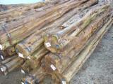 Tropical Wood  Logs Netherlands - Saw Logs, Pari udu, acariquara