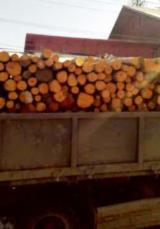 null - Firewood/Woodlogs Cleaved