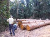Tropical Wood  Logs For Sale USA - Saw Logs, Azobé (Bongossi, Ekki), Cameroon