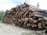 Hardwood  Logs Firewood - Firewood, Hornbeam