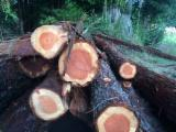 Redwood Logs from North America