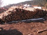 Wood Logs For Sale - Find On Fordaq Best Timber Logs - Saw Logs, Spruce (Picea abies) - Whitewood