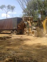 Tropical Wood  Logs - Saw Logs, Teak, FSC