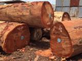 Tropical Wood  Sawn Timber - Lumber - Planed Timber - Good Quality Woods Such as = Azobe - Ebony - Bubinga - Ayous - Padouk - Kosso - Ayous - Sapelli - Ebiara - Ekop Beli - Okan - Okoume ....