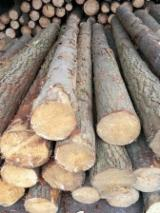 Wood Logs For Sale - Find On Fordaq Best Timber Logs - RADIATA PINE LOGS