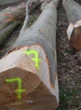 Hardwood  Logs Beech Europe For Sale - Beech Logs