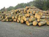 Drewno Liściaste Tarcica – Drewno Budowlane – Tarcica Strugana - Klepki, Kołki, Dąb (europejski)