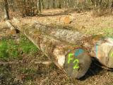 Hardwood  Logs - ash logs