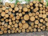 Hardwood  Logs For Sale Poland - Selling wood stacked beech, alder range S2A , S2B