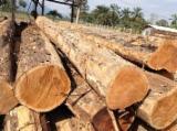 Tropsko Drvo  Trupci - Za Rezanje, Teak, Kolumbija
