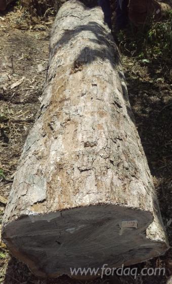 Troncos de madeira maciça