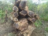 Hardwood Logs For Sale - Register And Contact Companies - Ebony Wood Logs/African Black Wood