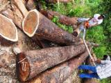 Furnierholz, Messerfurnierstämme