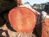 Tropical Wood  Logs - TZALAM LYSILOMA BAHAMENSIS CARIBBEAN WALNUT VENEER GRADE