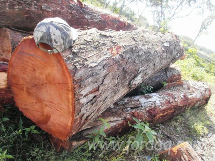 Tree Bark Veneer : Tzalam lysiloma bahamensis caribbean walnut veneer grade