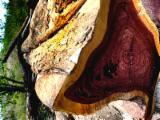 Schnittholzstämme, Amarante - Purpleheart