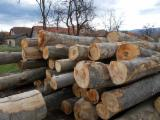 Hardwood  Logs For Sale - Saw Logs, Beech (Europe)