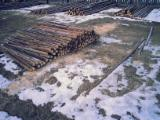 Lemn Rotund Calibrat - Capriori (lemn rotund subtire) stalpi, pari, araci, bile, manele, grinzi rotunde.