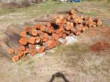 Hardwood  Logs - Saw Logs, Plum