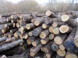Hardwood Logs For Sale - Register And Contact Companies - Saw Logs, Oak (European)