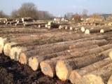 Hardwood  Logs PEFC FFC - Sell ASH Logs