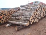 Hardwood  Logs For Sale - Birch round logs