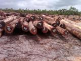 Forest And Logs India - Sell Wamara Round Logs from Guyana