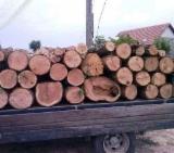 Finden Sie Holzlieferanten auf Fordaq Feuerholz, Brennholz gespalten, Laubholz