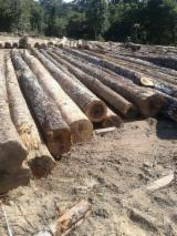 Tropical Wood  Logs For Sale - Saw Logs, Wamara, Ironwood, Suriname