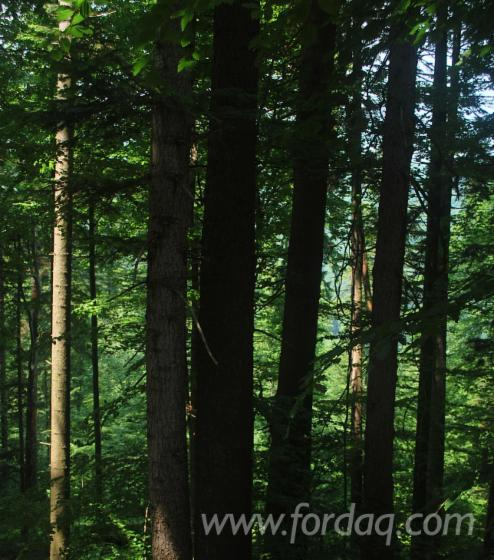 Forests-For-Sale-In-Romania-400