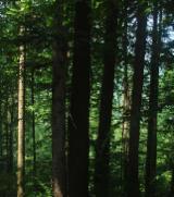Лісисті Місцевості Без Хат - Румунія, Бук (Європа)