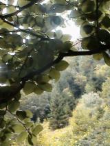 Waldgebiete Zu Verkaufen Rumänien - Rumänien, Buche