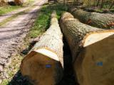Hardwood  Logs - Saw Logs, Oak (European)