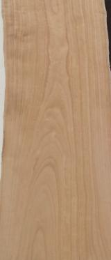 Sawn And Structural Timber Paulownia - African Paulownia Planks (boards) F 1 from Italy, Lombardei / Veneto