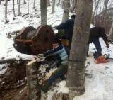 Used Forest Harvesting Equipment France - Skidding - Forwarding, Cableway